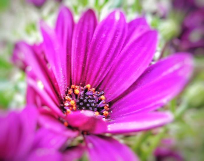 """The teachings of a flower """"I Give not because I have a lot...I give because I know how it feels to have nothing"""" Pink Flower Magenta Inspired Enjoying Nature Flower Collection EyeEm Nature Lover Free Open Edit Joyoflife"""