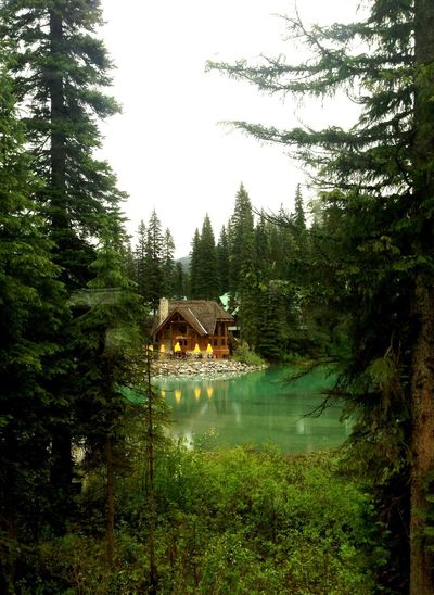 Wood Hut Forrest Nature Photography Picture Photoshoot Serenity Outdoors Outdoor Photography Green Chilling Scenics