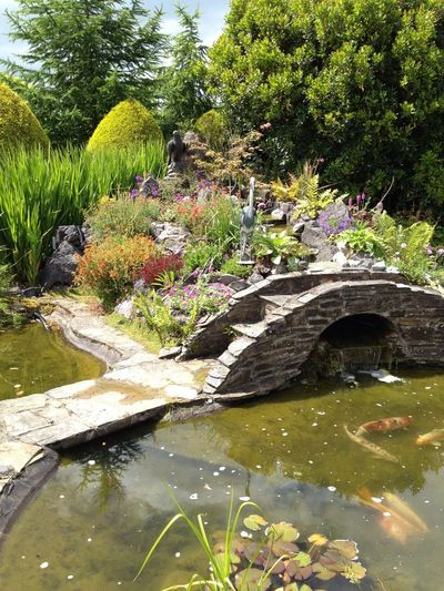 Beauty In Nature Botanical Garden Day Formal Garden Garden Green Color Growth Japanese Garden Nature No People Ornamental Garden Outdoors Plant Reflection Tree Water Watermill Water Reflections Water_collection Bridge Bridge View Bridge Over Water Bridge Photography Water Garden  Water Gardens