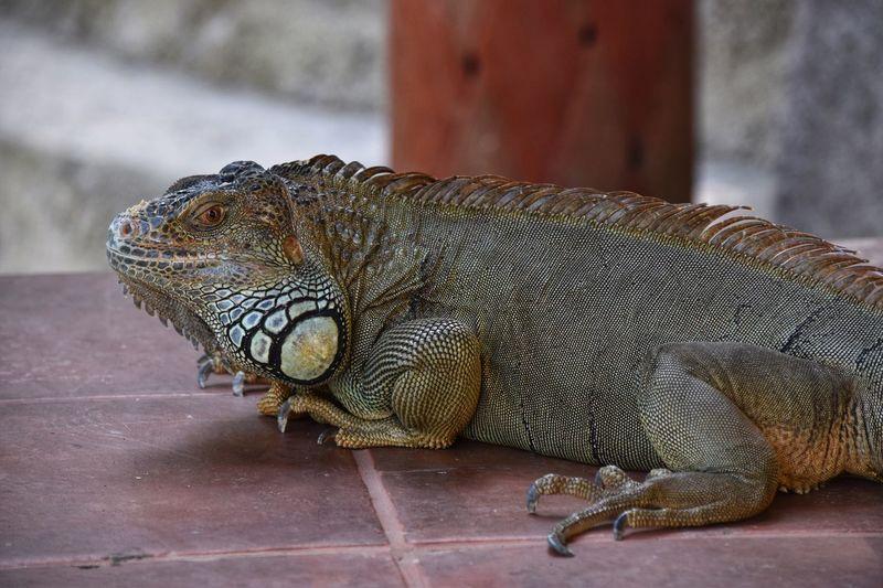 Reptile Animal Animal Themes One Animal Animal Wildlife Vertebrate Animals In The Wild