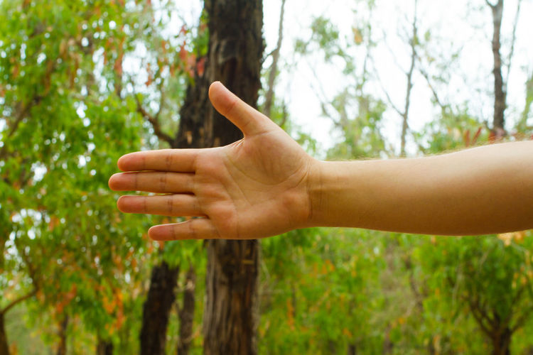 Cropped hand showing stop gesture against trees in forest