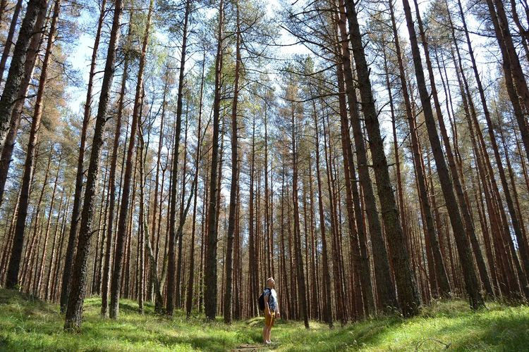 One Person One Men People Standing Landscape Forest Tree Men Tree Trunk WoodLand Sky Grass Grassland Green Woods