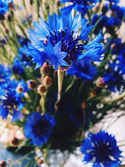 Flower Beauty In Nature Blue Plant Nature Botany First Eyeem Photo