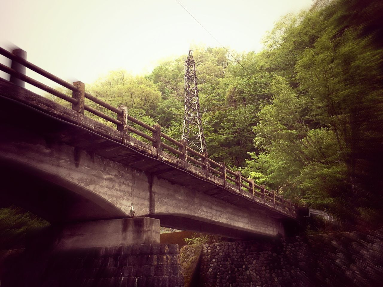 bridge - man made structure, connection, tree, architecture, built structure, railing, no people, day, nature, bridge, growth, outdoors, footbridge, sky