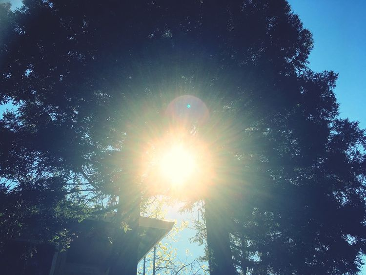 Monday funday Sunlight Sun Tree No People Beauty In Nature Growth Lens Flare