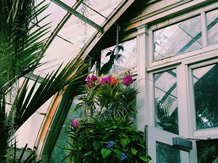 The Orchid Show // 6 🌹 Flowers Pink Fluorescent Botanicalgardens Plants Greenhouse Orchids Orchidshow Plantlovers Floral NY NYC Aesthetic Love Colorful Bronx Spring Houseplants Plantlove Greenery Urbanjungle Hangingplants Flower Window Architecture Built Structure Plant