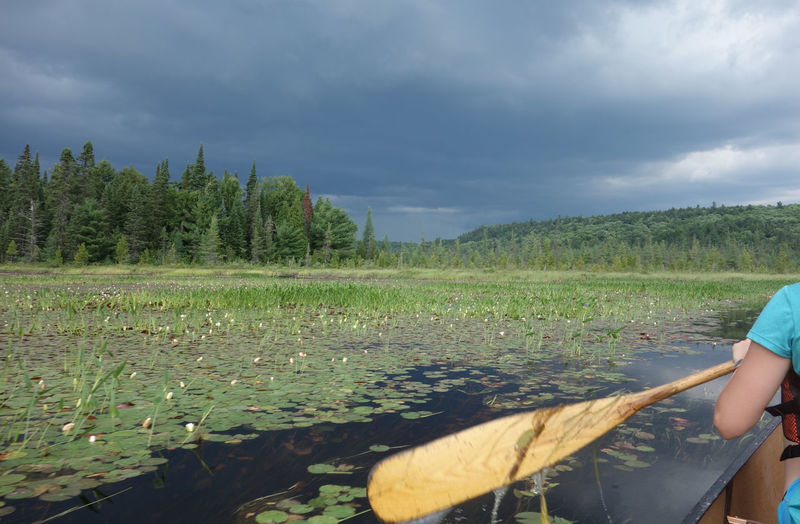 Trying to paddle faster than the approaching thunderstorm in Algonquin Park, Canada Nofilter Plant Cloud - Sky One Person Sky Scenics - Nature Nature Real People Growth Environment Landscape Beauty In Nature Green Color Field Tranquil Scene Tranquility Outdoors Canoe Canoeing Paddling Paddle Algonquin Park Thunderstorm Thunderstorm Approaching Canada Algonquinprovincialpark EyeEmNewHere This Is Strength