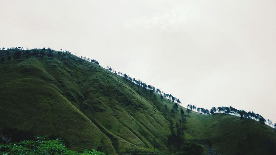 Panorama Lake Toba Tea Crop Tree Tree Area Mountain Terraced Field Rural Scene Agriculture Lush - Description Social Issues Fog Archipelago Volcanic Rock Atmospheric Mood Volcanic Landscape Dramatic Sky