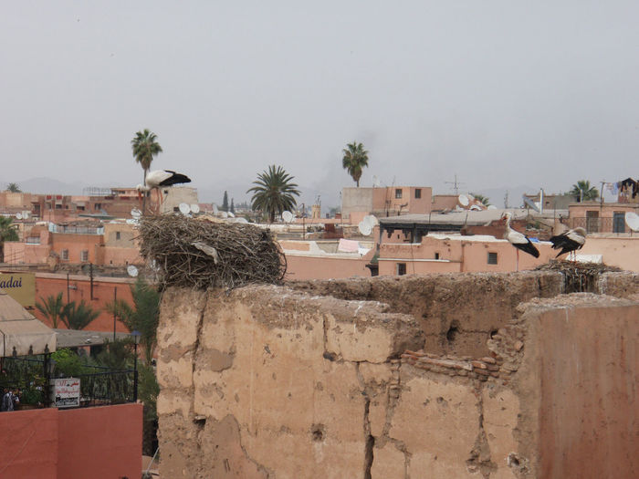 Africa Ancient Architecture Arid Climate City Cloudy History Landscape Marrakech Marrakesh Morocco Old Old Ruin Overcast Ruins Sky Stone Wall Trees