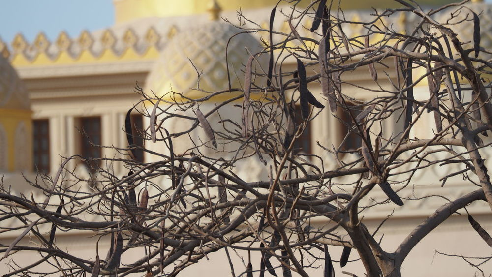 mosque Musque Politics And Government City Bare Tree Branch Politics Architecture Building Exterior Built Structure