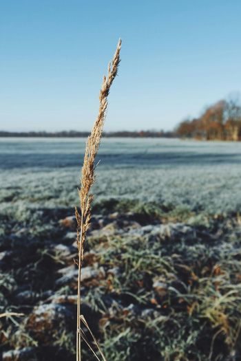 Showcase: December Melancholic Vscocam Nature_collection Nature_perfection Nature Photography Naturelovers