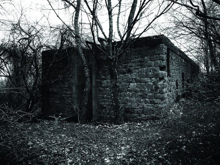 Bare trees on old house in forest