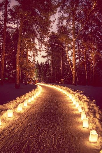 Candle Path Forest