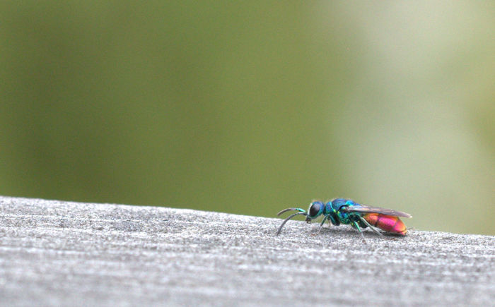 Colorful friend Animal Animal Themes Animal Wildlife Animal Wing Animals In The Wild Close-up Day Fly Focus On Foreground Green Color Housefly Insect Invertebrate Nature No People One Animal Outdoors Selective Focus Sunlight Zoology