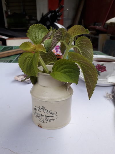 Mojito Flower