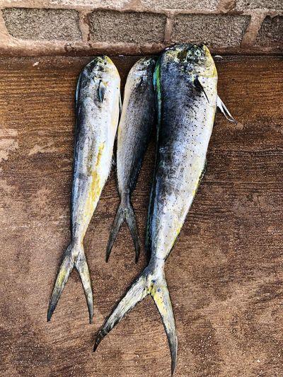 Ocean Fish Sea Fish Asian  Nobody Fish Market Raw Seafoods SriLanka Asian  ASIA EyeEm Selects High Angle View Land Day Close-up Human Leg Body Part Nature Fish