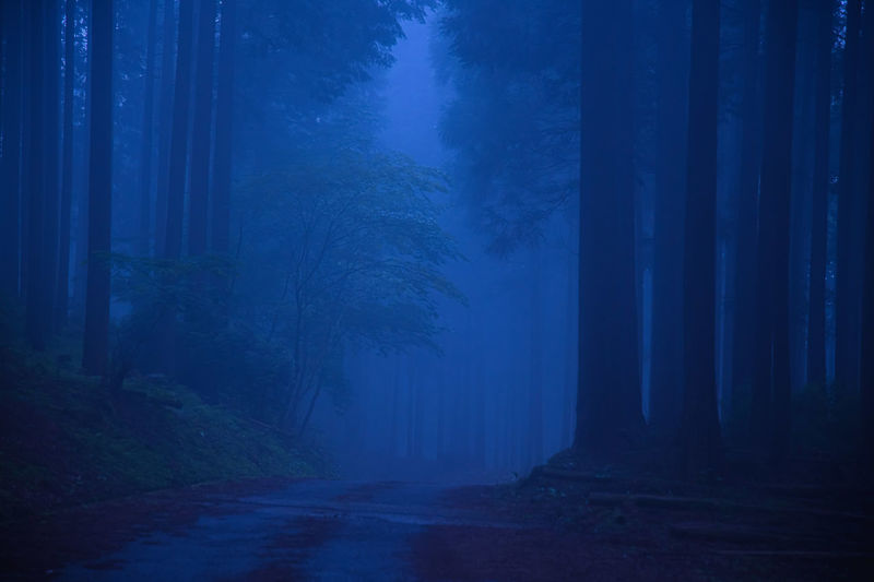 Footpath in forest at night