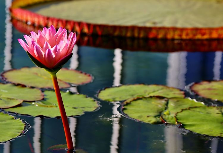 Flowers Water