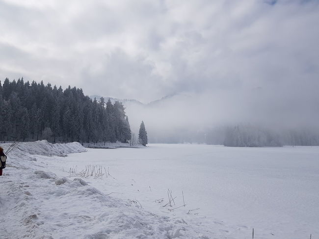 Spitzingsee, Bavaria, Winter, Snow, no People, Nature Tree Snowing Snow Mountain Cold Temperature Winter Forest Fog Frozen