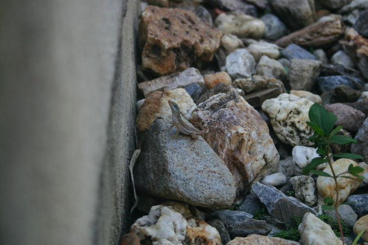 Camouflage Lizard Lizard Watching Lizard Nature Lizard Close Up Nature Photography Lizard Friend Canonphotography