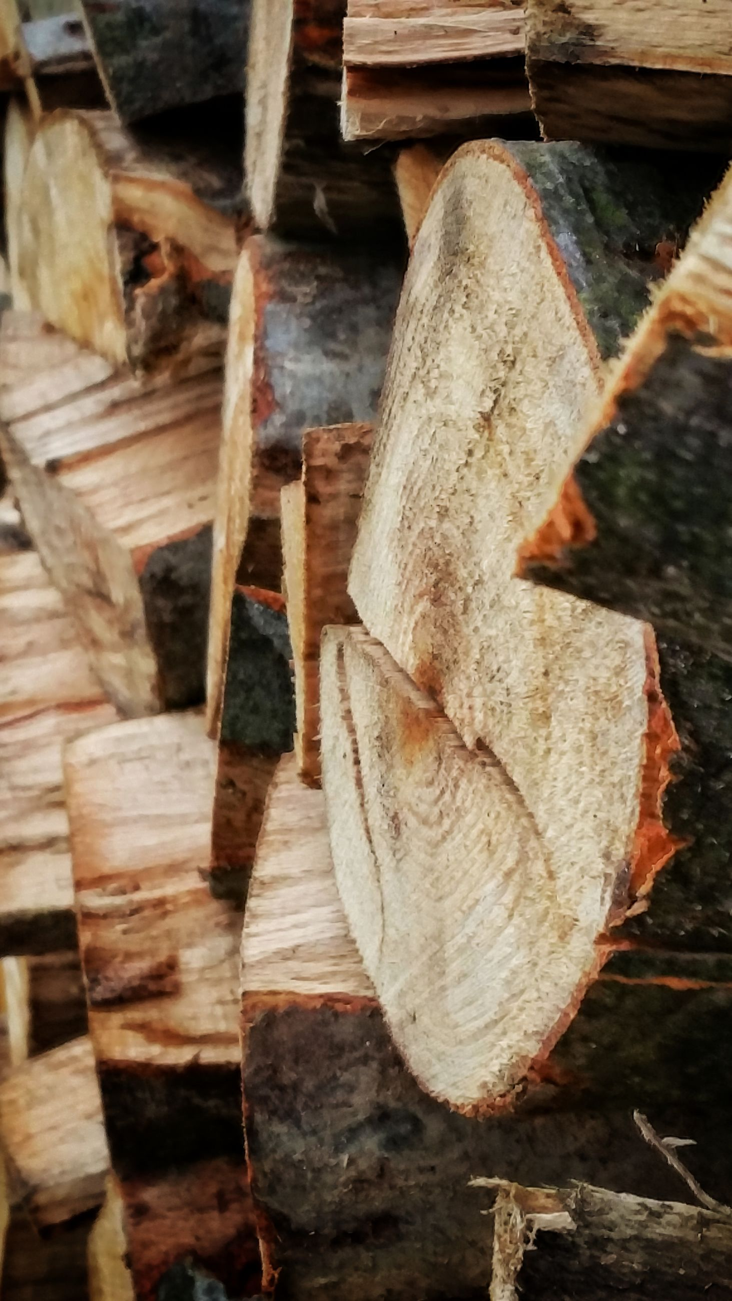close-up, wood - material, wooden, day, weathered, focus on foreground, outdoors, no people