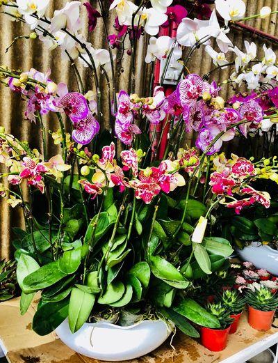 EyeEm Gallery Flower Plant No People Leaf Freshness Day Nature