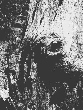 The Old Oak Close-up Black & White Closeupshot Black And White Blackandwhite Pattern, Texture, Shape And Form Texture And Surfaces Natural Beauty! Decay