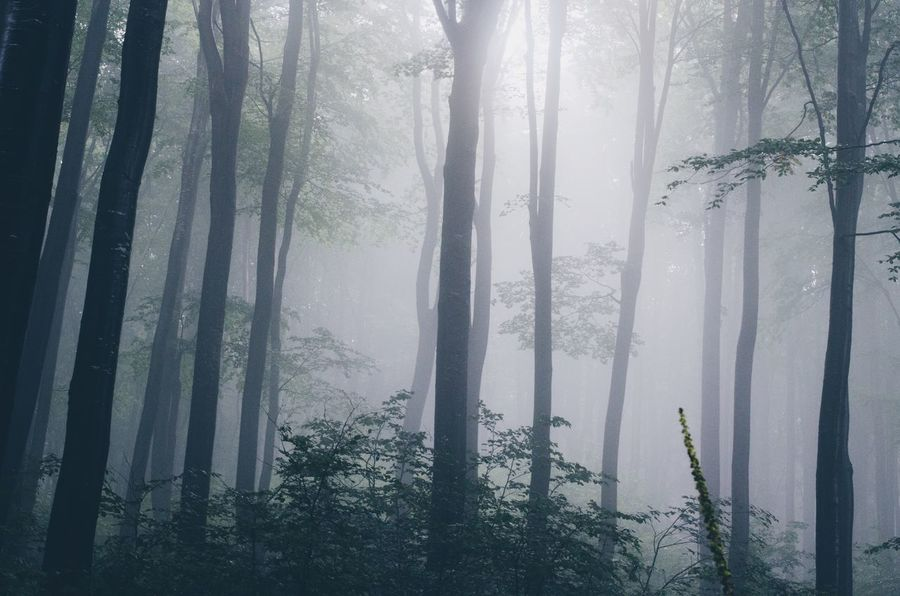 silent forest Peaceful Peace Silence Green Europe Walk Nature Tranquility Mountain Summer Rainy Misty Mist Tree Window Curtain Plant Forest Fog No People Day Wet Cold Temperature Outdoors Beauty In Nature Backgrounds Rain Winter Water Transparent