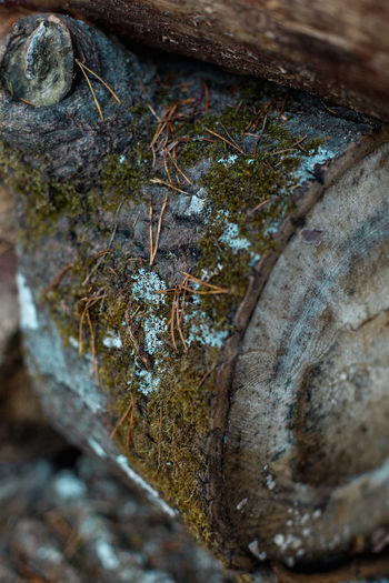 Close-up Selective Focus Tree Plant No People Tree Trunk Trunk Textured  Day Nature Growth Outdoors Rough Full Frame Pattern Moss Detail Wood - Material Backgrounds Food Bark