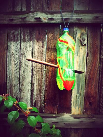 artcycle Garden Recycling Green Art Backyardphotography Colour Of Life in Kwazulu Natal South Africa