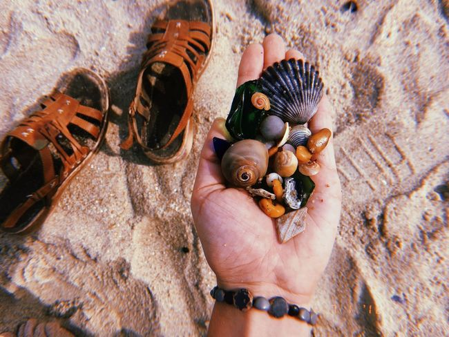 #beach #collection #ocean #sand #seashells Close-up Day Hand Holding Human Hand Marine Nature Shell