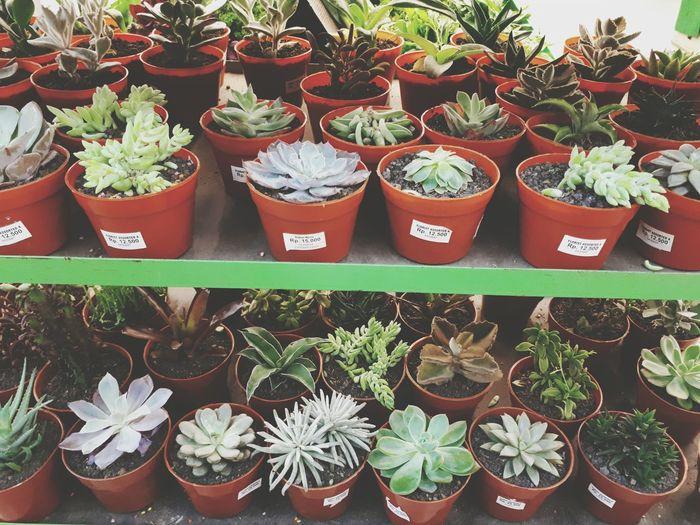 Cactus Cactus Plant Cactusportrait