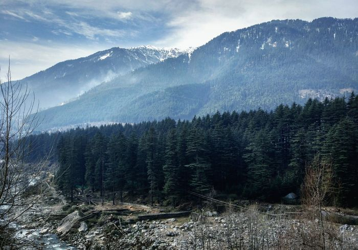 EyeEm Selects Tree Forest Pinaceae Pine Tree Coniferous Tree Pine Woodland Scenics - Nature Beauty In Nature WoodLand Nature EyeEm Nature Lover Himalayan Mountains
