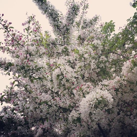 More beautiful blooming ... Spring Goodmorning Newbeginning Flowers happytrees