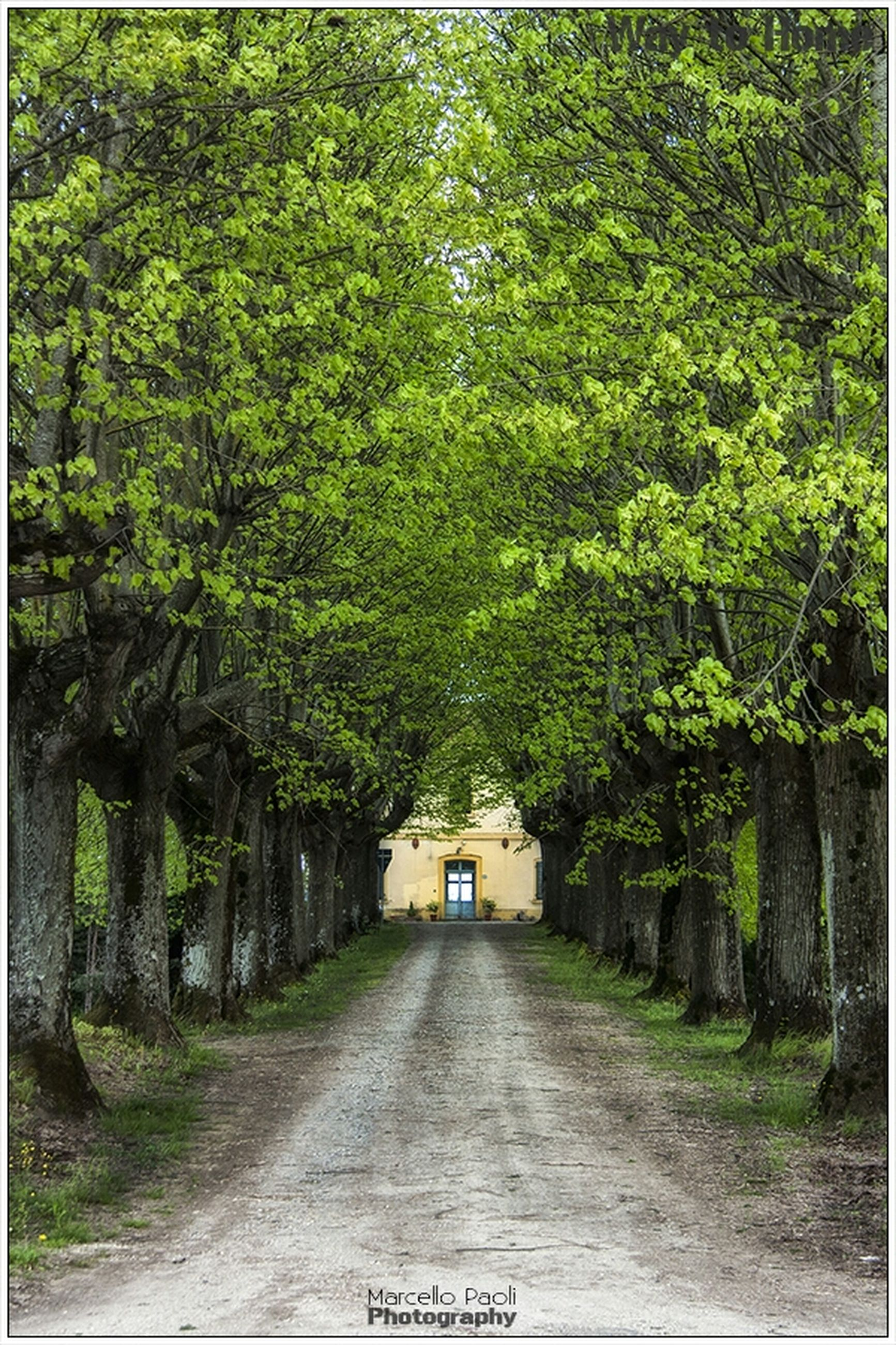 the way forward, tree, transfer print, diminishing perspective, growth, green color, vanishing point, auto post production filter, footpath, empty, road, transportation, nature, plant, narrow, tranquility, walkway, day, pathway, long