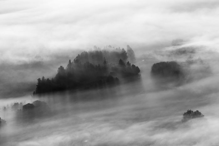 A very misty morning in the Peak District , some of the mist was swirling around this collection of trees. Black & White Cloud Misty Rural Tree Trees WoodLand Beauty In Nature Black And White Blackandwhite Landscape Mist Misty Morning Monochrome Nature No People Outdoors Peak District  Scenics Swirl Tranquility Tree Weather