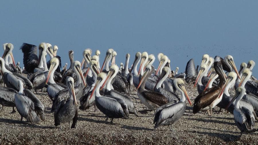 Flock of birds on the land