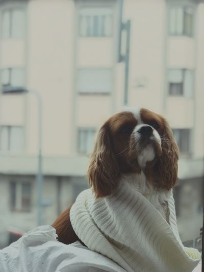 Dog sitting open window No People Mammal Portrait Sitting Alone Cavalier King Charles Spaniel Focus On Foreground Leisure Activity Day Built Structure Friendship Indoors  Young Adult Lifestyles Building Exterior Architecture Close-up