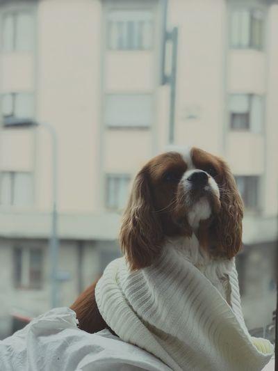 Dog sitting open window