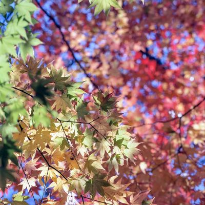 Tokyo Mamiya C330 Film Photography Film Plant Growth Beauty In Nature Tree Nature No People Day Branch Low Angle View Leaf Close-up Plant Part Flowering Plant Flower Focus On Foreground Outdoors Fragility Autumn Vulnerability  Selective Focus