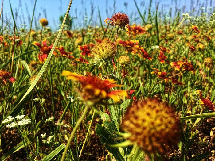 Wildflowers Greeting at tail of run Sunny Day Plant Growth Flower Flowering Plant Beauty In Nature Nature No People Close-up Tranquility Outdoors Sunlight Green Color Fragility Day Land Field