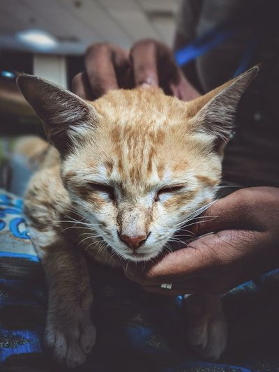 Pets Stray Animal Whisker Cat Feline Animal Face Yellow Eyes
