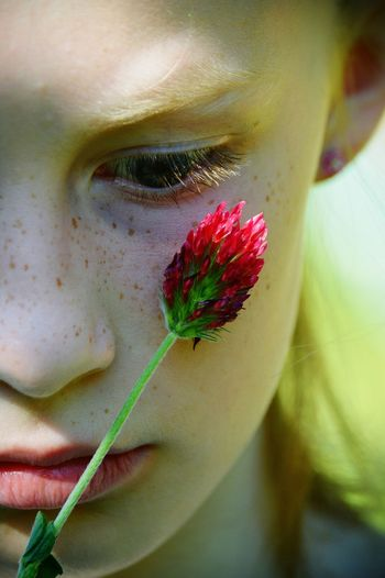 Red Clover Red Clover Flower Lips Freckles Face Close-up Portrait Girl Pretty Freckle