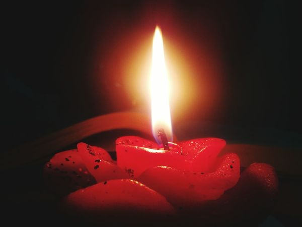 Candlelight A Rose
