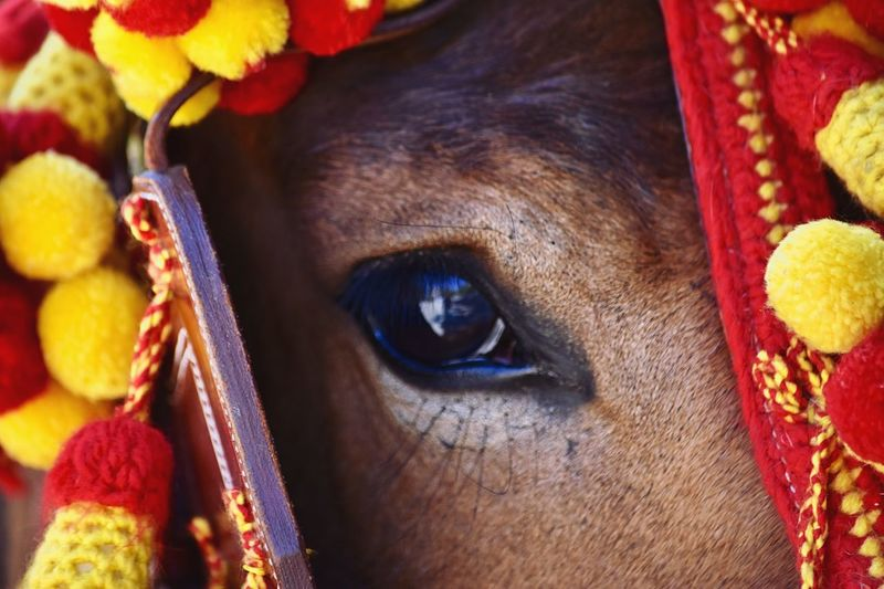 Horses Festival EyeEm Selects 10 Horse Close-up One Animal Domestic Animals Mammal Pets Domestic Eye Animal Body Part Vertebrate Horse Close-up One Animal Domestic Animals Mammal Pets Domestic Eye Animal Body Part Vertebrate