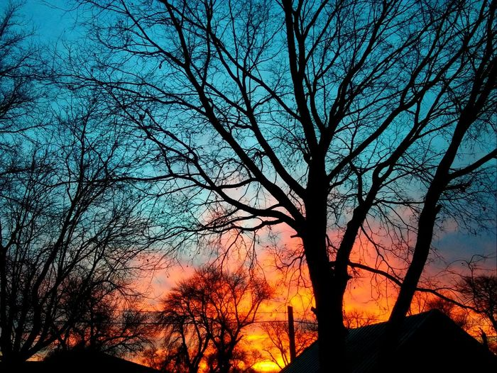 Another back yard sunrise!! Tree Silhouette Branch Nature Sky Beauty In Nature Low Angle View Outdoors Bare Tree No People Tree Trunk Picturejunkie Check This Out Pretty♡ Sunrise