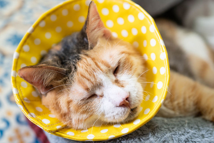 Animal Animal Head  Animal Themes Cat Close-up Eyes Closed  Feline Focus On Foreground Indoors  Mammal No People One Animal Pets Relaxation Sleeping Vertebrate Yellow