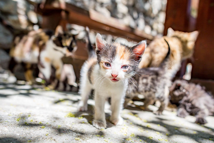 Animal Animal Eye Animal Themes Cat Day Domestic Domestic Animals Domestic Cat Feline Kitten Looking At Camera Mammal No People One Animal Pets Portrait Selective Focus Sunlight Vertebrate Whisker Young Animal