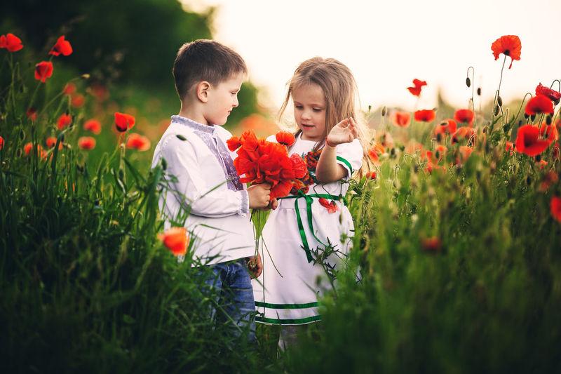 People on red flowering plants