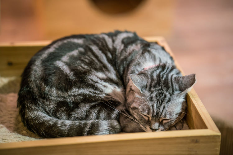 Meow . . . whiskers of different kind Animal Themes Close-up Day Domestic Animals Domestic Cat Feline Indoors  Lying Down Mammal No People One Animal Pets Relaxation